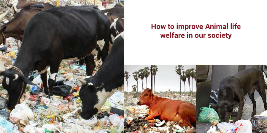 How to improve Animal life welfare in our society