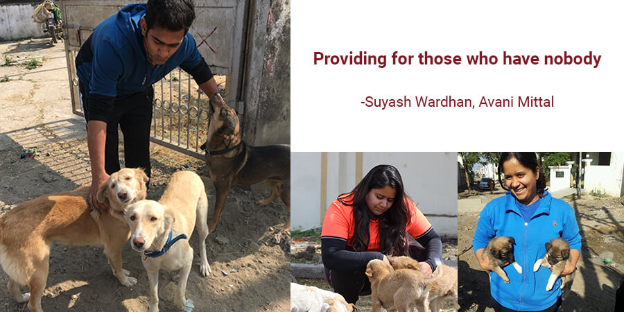Providing for those who have Nobody- Feeding the Strays
