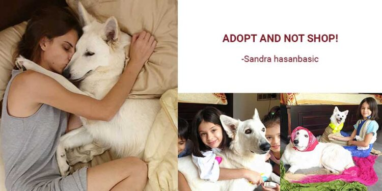 Adopt and not shop!